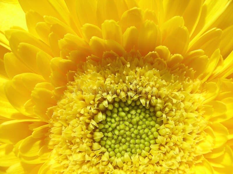 Gele zonneschijn stock afbeelding