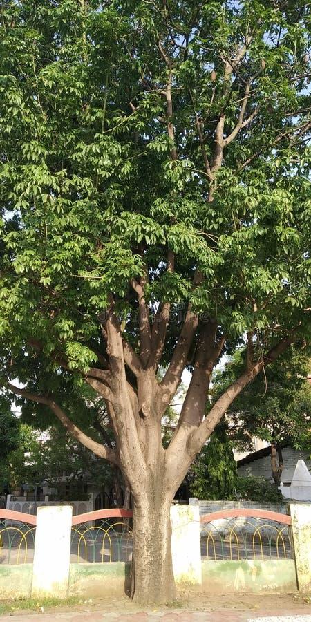 Gelegentlich klicken Sie an den Gartenbaum lizenzfreie stockfotografie