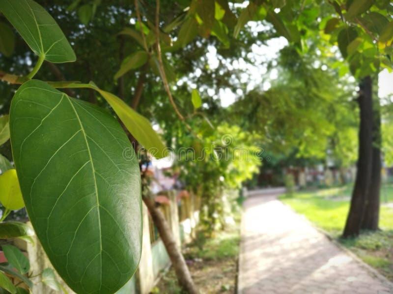 Gelegentlich klicken Sie an die Blätter stockfotografie