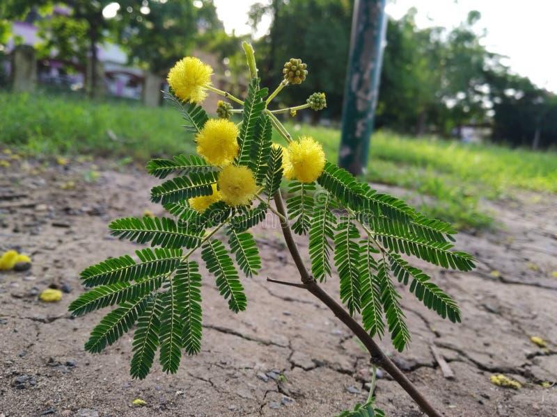 Gelegentlich klicken Sie an die Blumen lizenzfreie stockfotografie