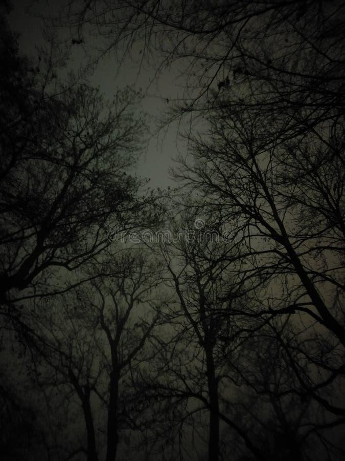 Gelegentlicher Nachtpics, Bäume lizenzfreie stockfotos