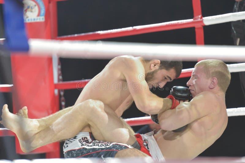 Gelijke in gemengde vechtsporten royalty-vrije stock afbeelding