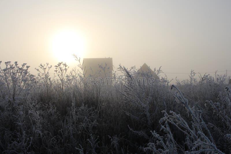Gelo bianco di mattina nebbiosa grigia sull'erba di autunno contro il sole pallido nel crepuscolo fotografia stock libera da diritti