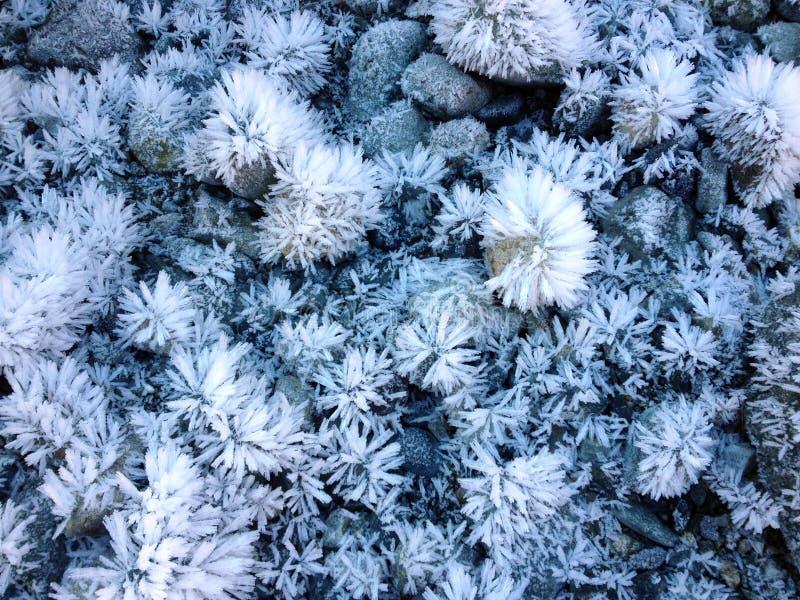 Gelo Crystal Garden 03 fotos de stock royalty free