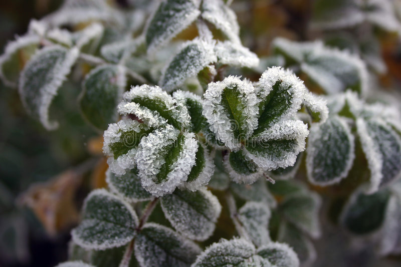 Download Gelo d'autunno fotografia stock. Immagine di mattina, stagionale - 222030