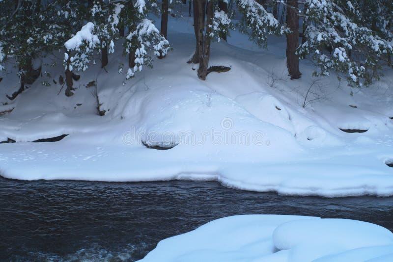 Gelo de água das árvores da neve da cena do rio da angra do inverno fotografia de stock royalty free