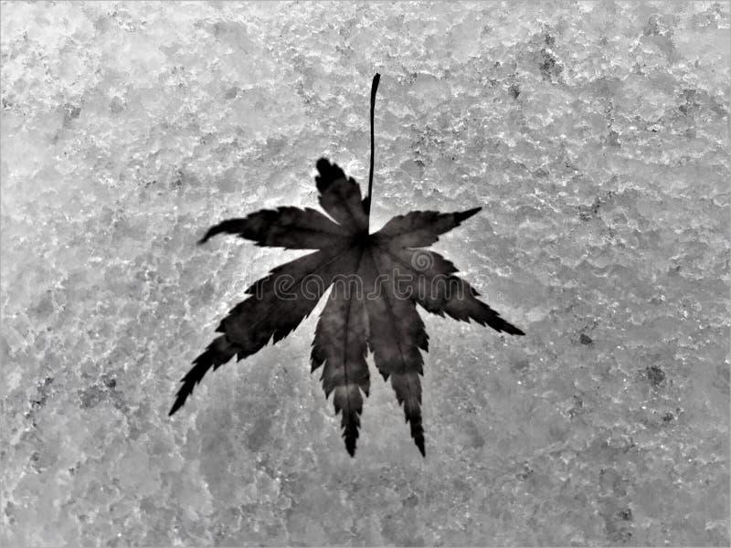 Gelo e folha, neve e inverno imagens de stock royalty free
