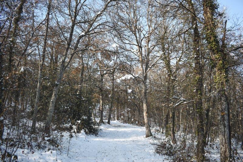 Gelo e neve em árvores altas fotos de stock