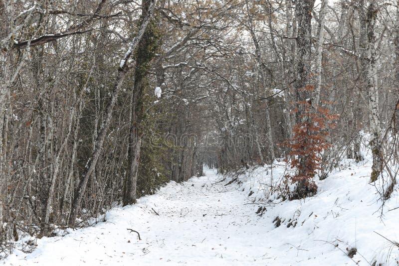 Gelo e neve em árvores altas foto de stock royalty free
