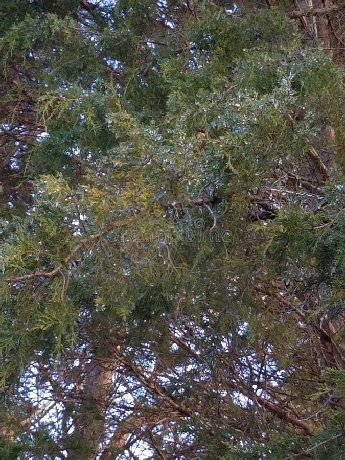 gelo em árvores fotografia de stock