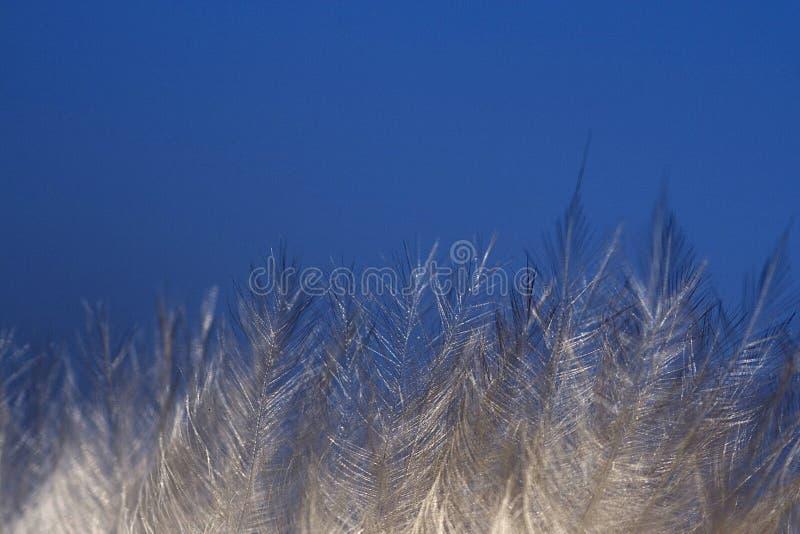Gelo em filiais imagens de stock