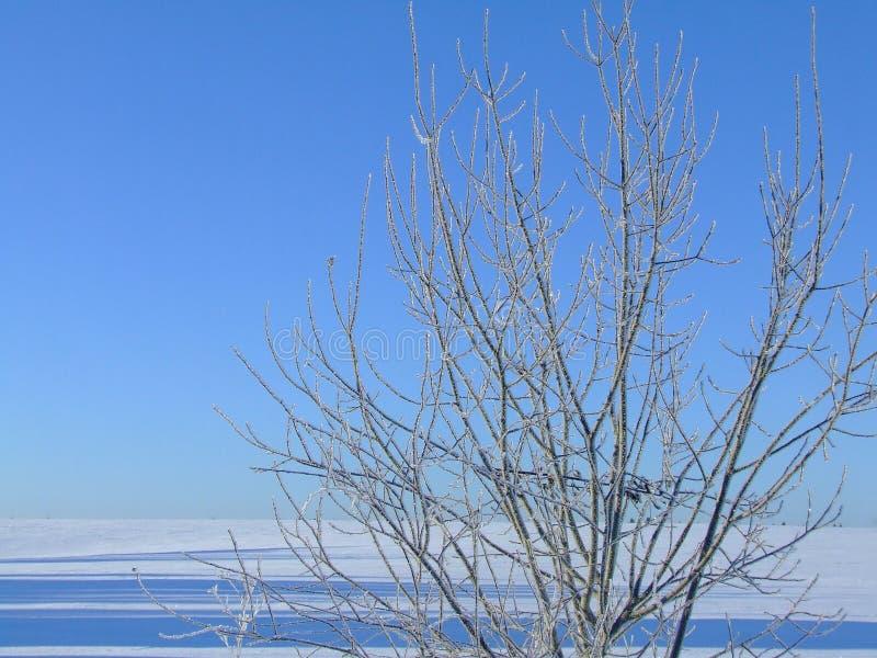 Gelo fresco fotografia de stock