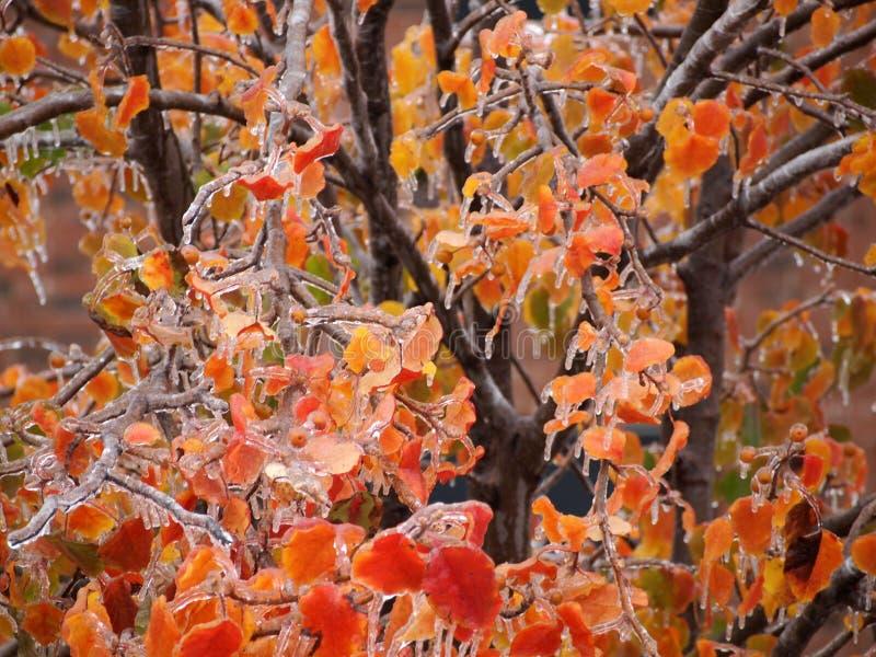 Gelo nas folhas da árvore foto de stock