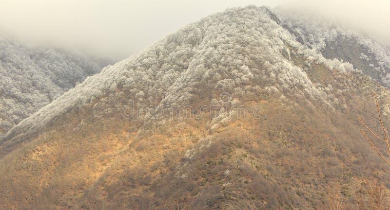 Gelo sugli alberi nelle montagne Qax Azerbaigian immagini stock libere da diritti