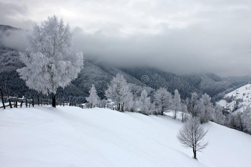 Gelo sugli alberi in un giorno freddo e nuvoloso fotografia stock