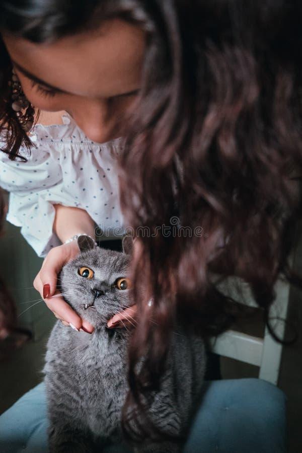 Gelockte junge Frau der Nahaufnahme, die den Kopf einer britischen Katze hält stockbild