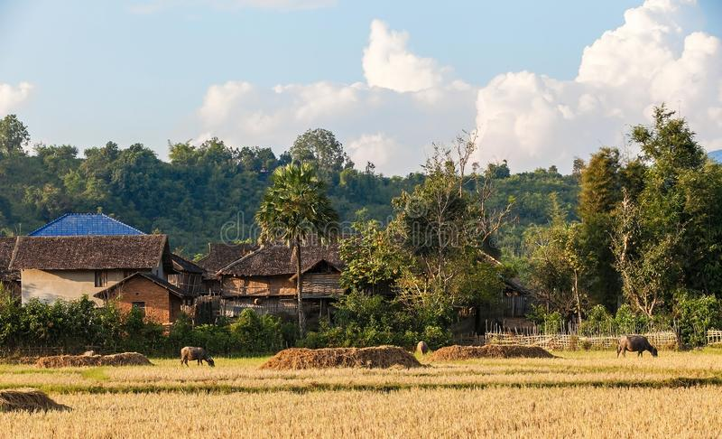 Gelukgezinsleven in het landelijke dorp royalty-vrije stock afbeeldingen