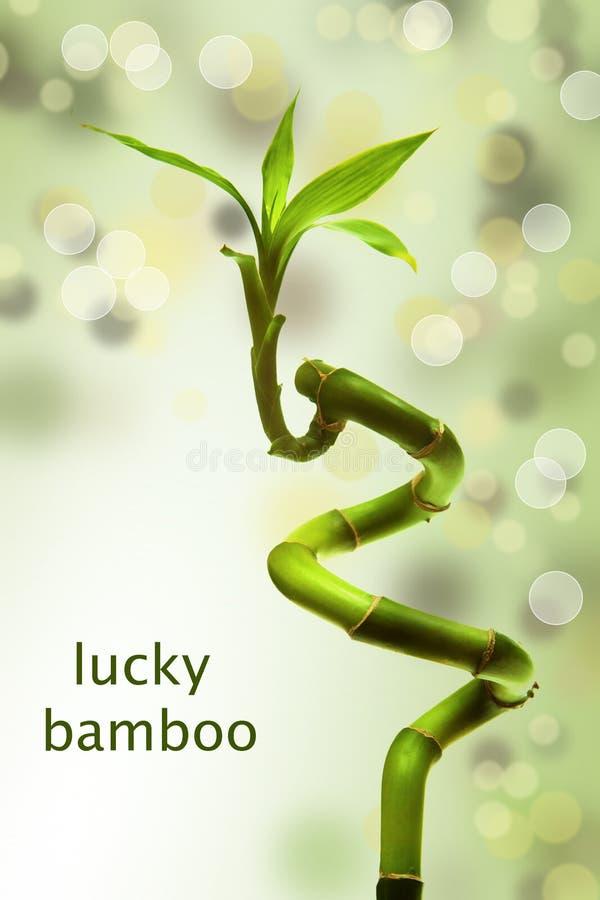 Gelukkig bamboe royalty-vrije stock foto's