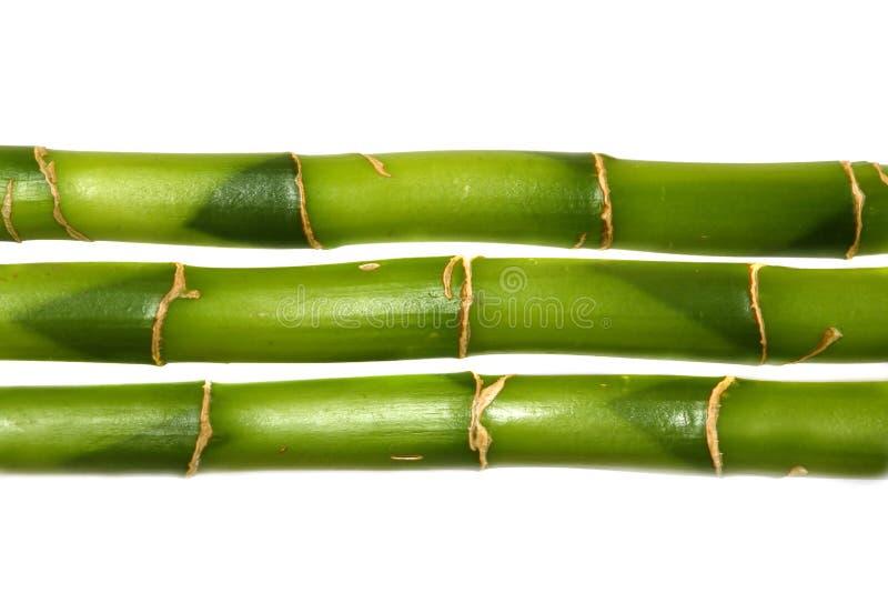 Gelukkig bamboe royalty-vrije stock foto