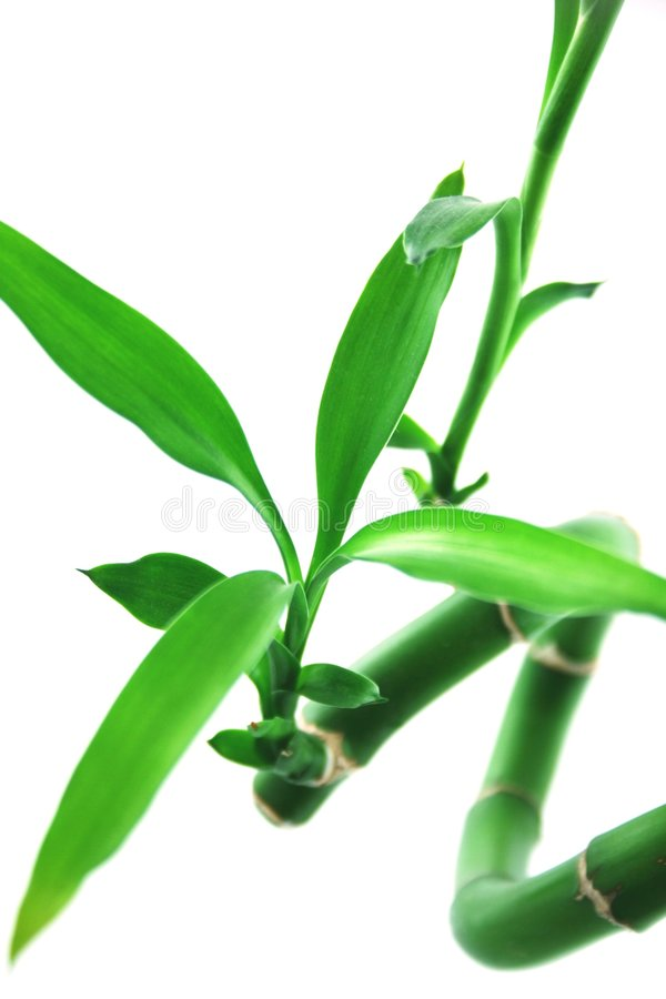 Gelukkig bamboe stock fotografie