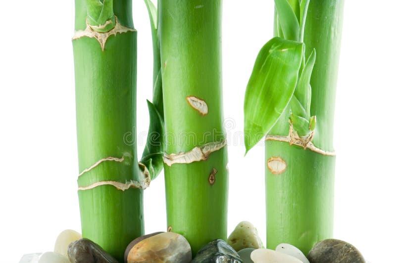 Gelukkig bamboe royalty-vrije stock afbeelding