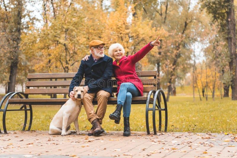 gelukkig hoger paar met labrador retriever-hondzitting op bank in de herfst royalty-vrije stock foto