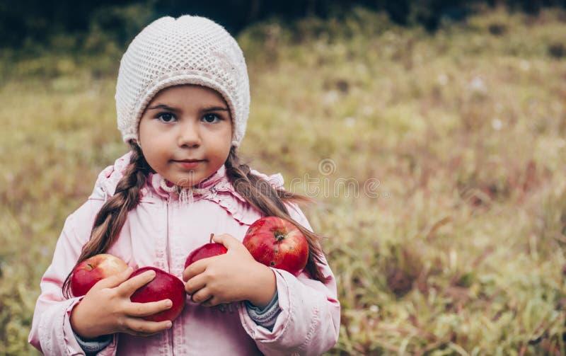 Gelukkig kind die rode appelen in zijn handen houden Oogst Grappig jong geitje in openlucht in de herfstpark stock foto's