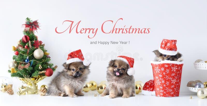 Gelukkig Nieuwjaar, Kerstmis, Hond in Santa Claus-hoed, Vieringsballen en andere decoratie stock afbeelding