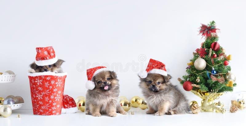 Gelukkig Nieuwjaar, Kerstmis, Hond in Santa Claus-hoed, Vieringsballen en andere decoratie stock fotografie
