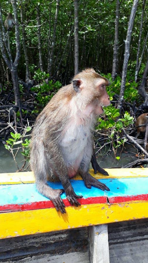 Gelukkige aap in Thailand stock afbeeldingen