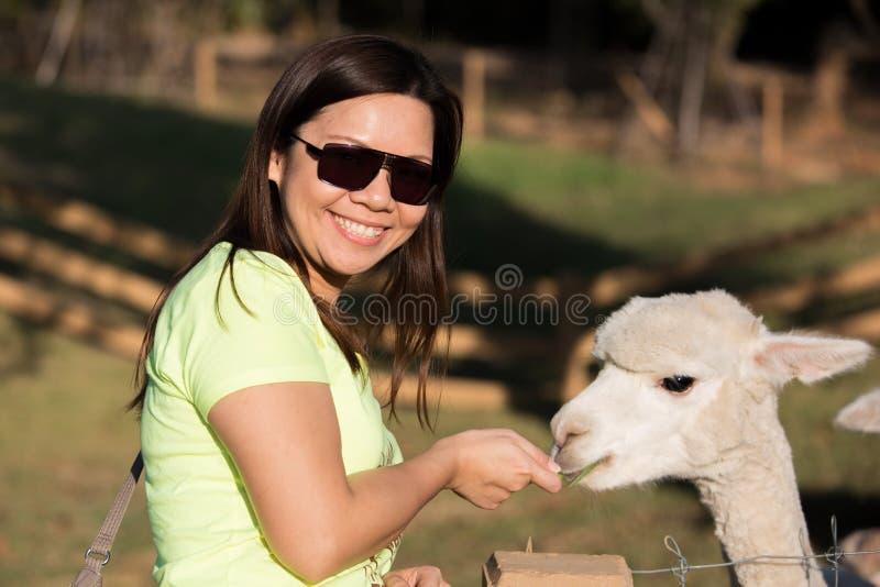 Gelukkige Alpaca royalty-vrije stock afbeeldingen
