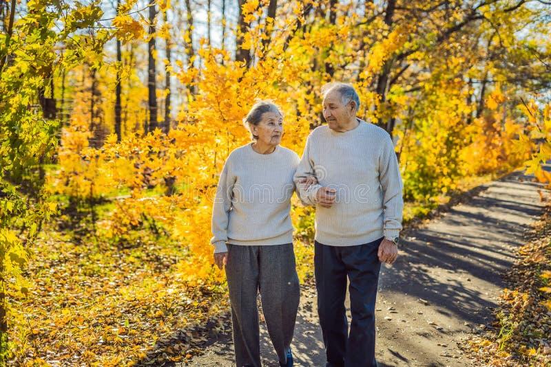 Gelukkige bejaarden in de de herfst bosfamilie, de leeftijd, het seizoen en mensenconcept - gelukkig hoger paar die over lopen royalty-vrije stock afbeelding
