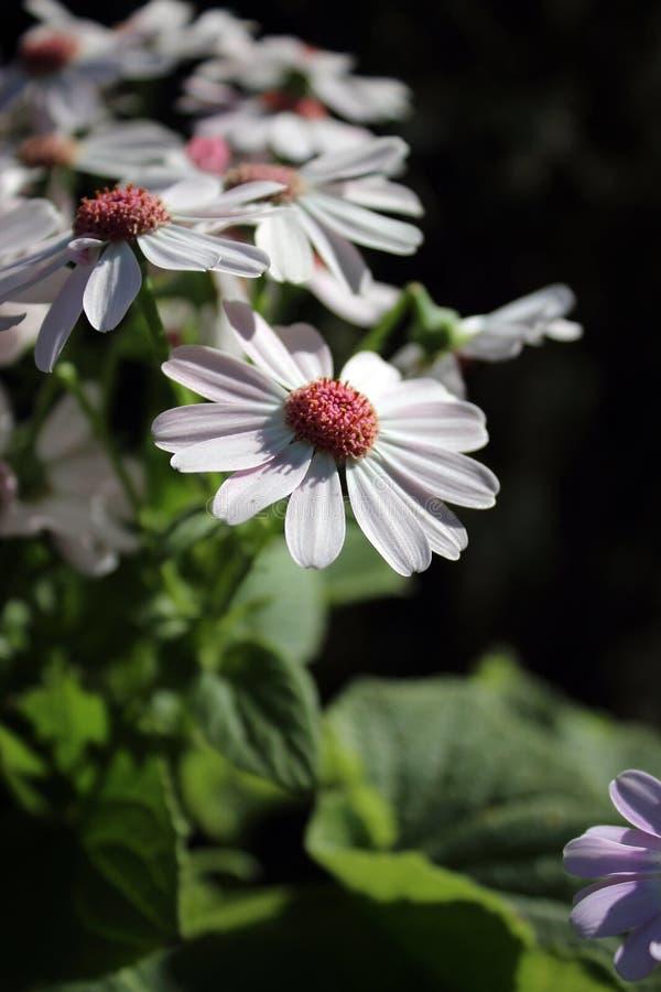 Gelukkige bloemen op zondag stock foto