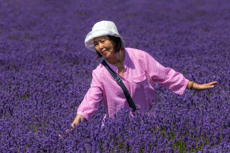 Gelukkige Dame op Lavendelgebied, Worcestershire, Engeland stock foto's
