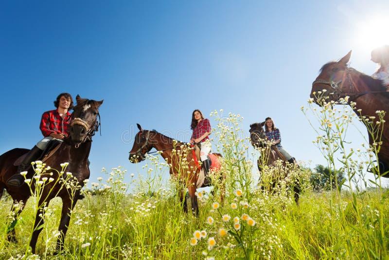 Gelukkige equestrians die baaipaarden in de weide berijden stock fotografie