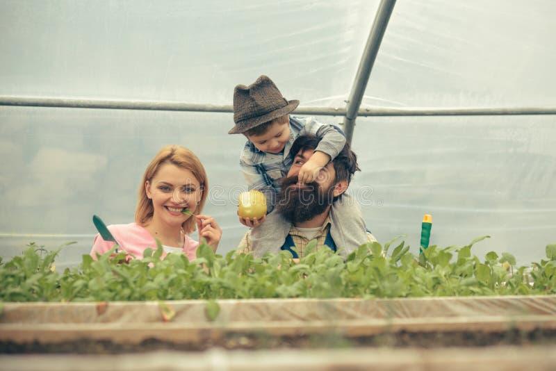 gelukkige familie in serre Mum het stellen met groen blad in haar mond terwijl het jonge geitje papa met appel voedt sitted op va stock fotografie