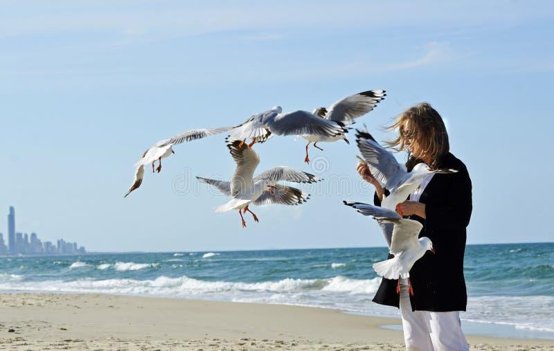Gelukkige gezonde rijpe voedende de zeemeeuwenvogels van de vrouwenhand op strand royalty-vrije stock afbeeldingen