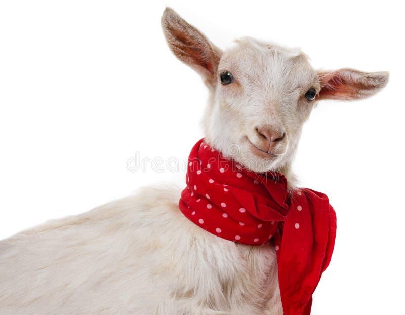 Gelukkige grappige geit stock afbeelding