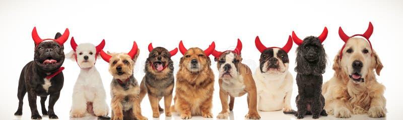 Gelukkige groep die honden Halloween vieren stock afbeeldingen