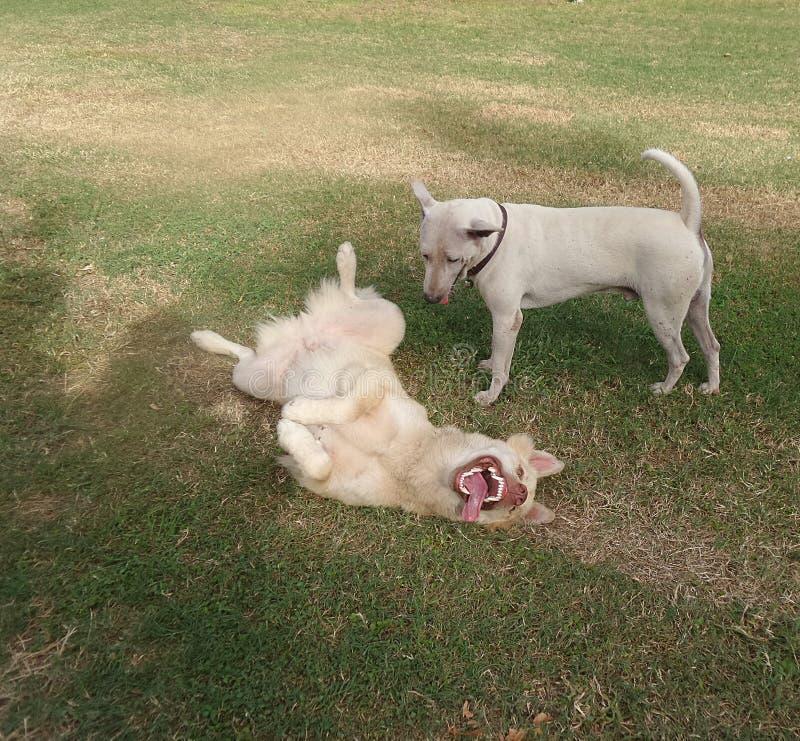 Gelukkige het spelen honden stock foto's