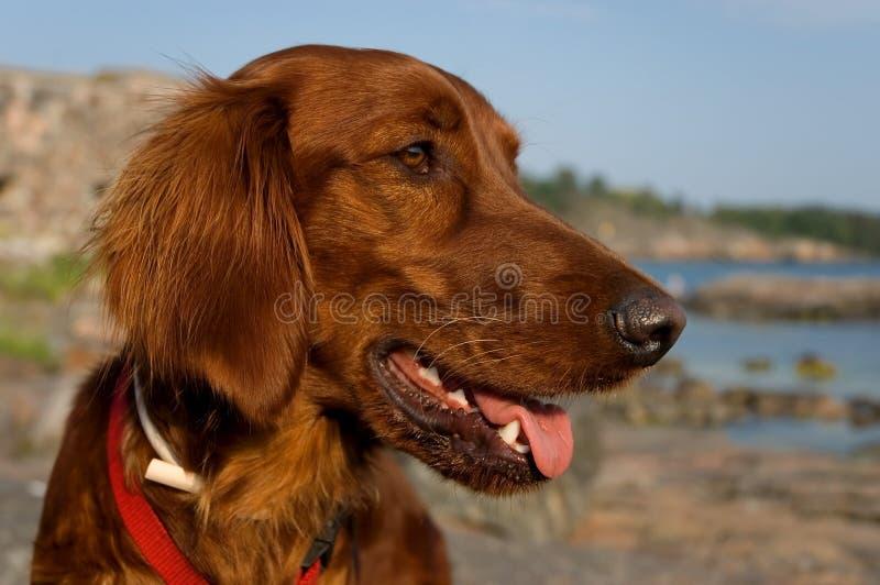 Gelukkige hond stock fotografie