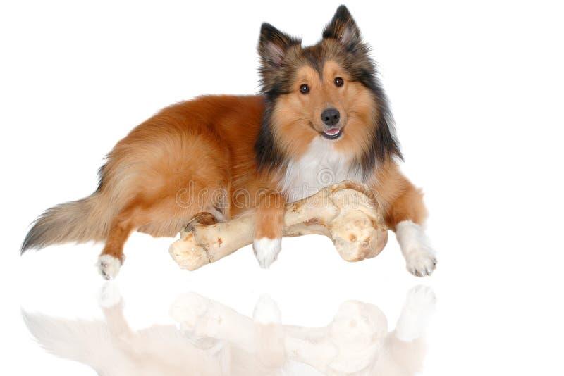 Gelukkige hond 3 royalty-vrije stock afbeelding