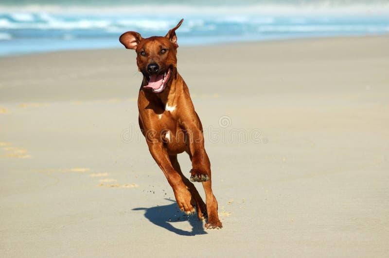 Gelukkige hond stock foto