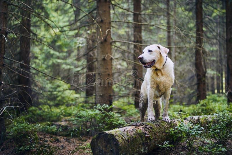 Gelukkige hond in aard stock afbeeldingen