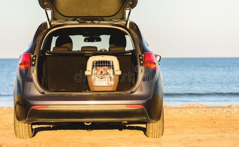 Gelukkige hond binnen huisdierendrager in het op zee strand van de autoboomstam stock foto