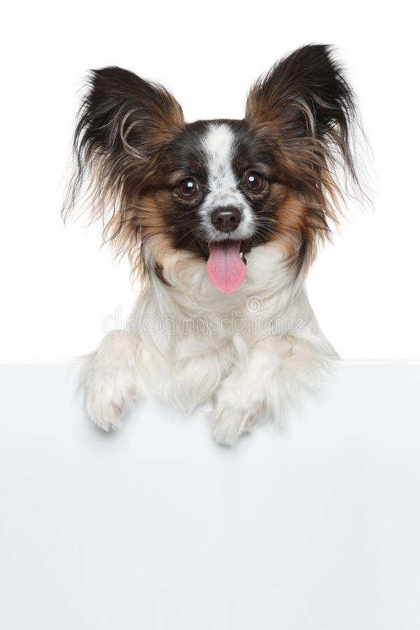 Gelukkige hond boven witte banner stock afbeeldingen