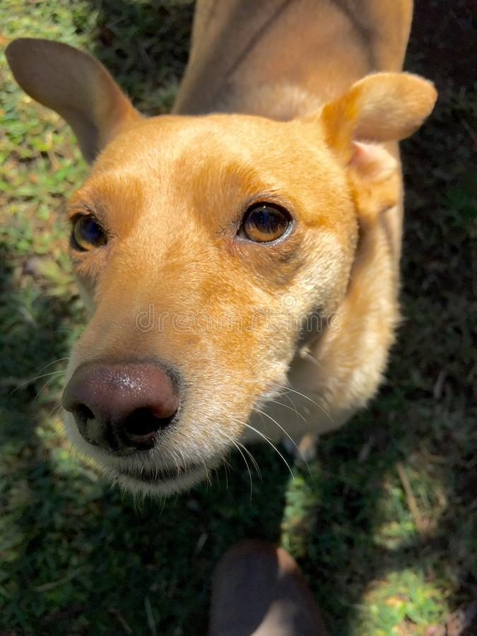Gelukkige hond in Costa Rica stock foto