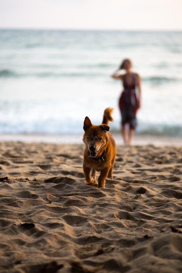 Gelukkige hond die naar eigenaar met een vrouw in een kleurrijke kleding op de achtergrond lopen stock foto