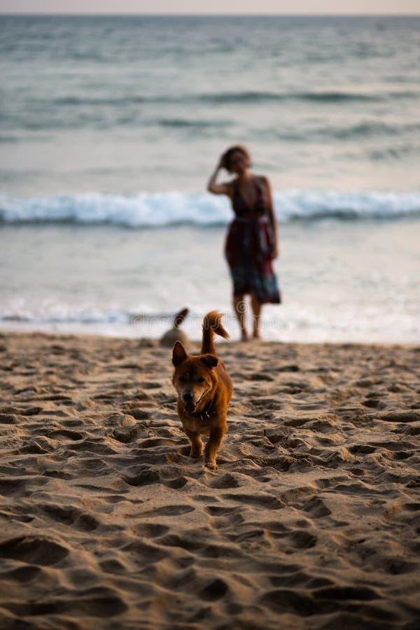 Gelukkige hond die naar eigenaar met een vrouw in een kleurrijke kleding op de achtergrond lopen stock fotografie
