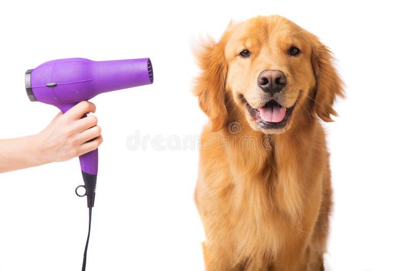 Gelukkige Hond in Groomer royalty-vrije stock foto
